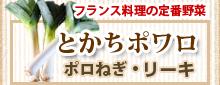 北海道十勝産ポロねぎ 販売