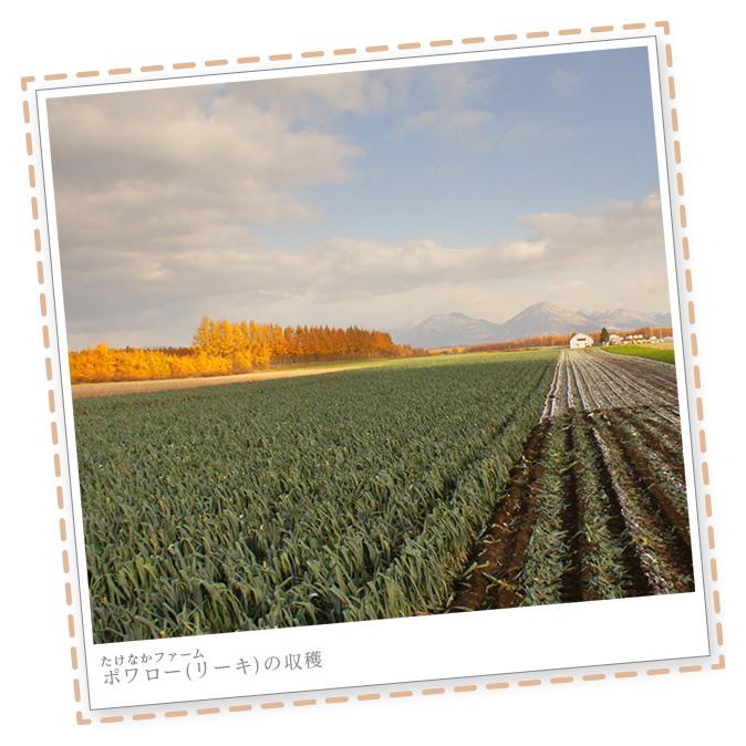 ポワローの収穫